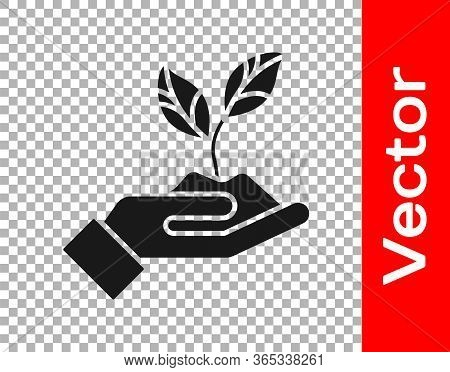 Black Plant In Hand Of Environmental Protection Icon Isolated On Transparent Background. Seed And Se