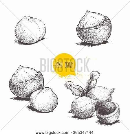 Hand Drawn Sketch Style Macadamia Nuts Set. Whole, Peeled, Single And Group. Vector Illustrations Is