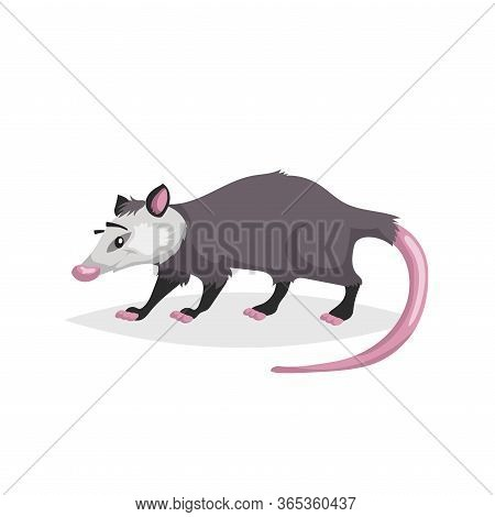 Cute Cartoon Opossum. North America Wild Animal. Vector Drawing For Kid And Child Books. Isolated On