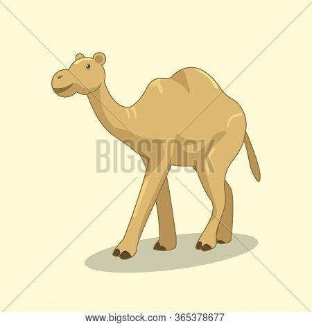 Illustration Of Brown Desert Camel