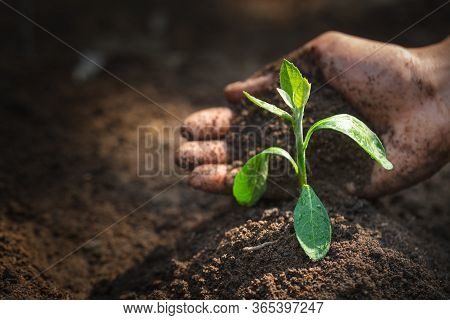 Seedlings That Grow From Perfect Soil Have The Idea Of Protecting The Hands Of Soil Preparation For