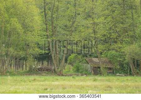 An Old Wooden Building In Thickets.\nvast Meadows. In The Middle There Is A Grove Of Deciduous Trees