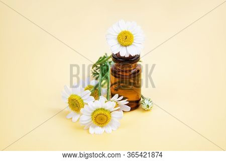 Closeup Of A Small Glass Bottle With Essential Oil And Fresh Camomile Flowers On A Neutral Pastel Ba