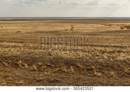 Endless Kazakhstan Steppes. Dry Grass In The Steppe.