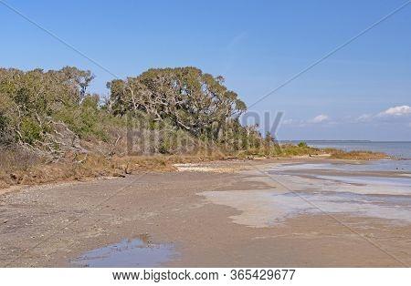 Live Oaks On The Gulf Coast In Aransas National Wildlife Refuge In Texas