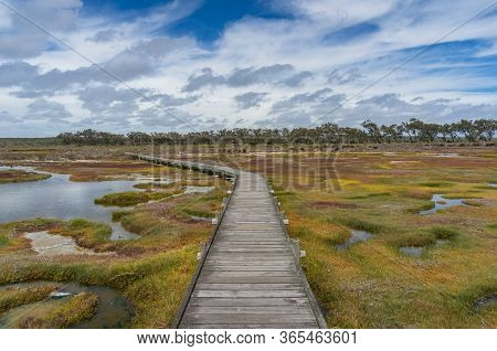 Wetlands Landscape With Hiking Path, Footbridge. Wetland Conservation Ecology Landscape