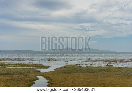 Wetlands Landscape With Aquatic Vegetation And Flamingo Birds. Wetland Conservation Ecology Landscap