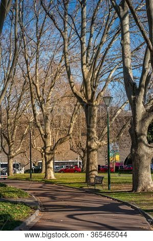 Urban Park Alley With Bare Leafless Trees. Winter Park With Bare Trees Urban Scene