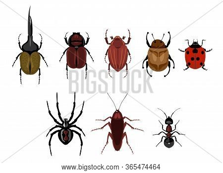 Vector Set Of Cute Cartoon Insects. Crawling Insects Set - Ant, Spider, Beetle, Cockroach, Ladybug.