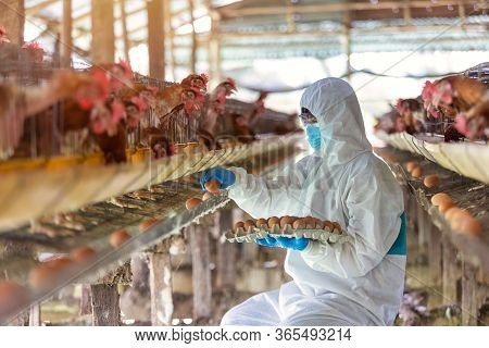 Asian Farmer Wear Ppe Suit Protective Clothing To Spread The Corona Virus And Collect Fresh Eggs In