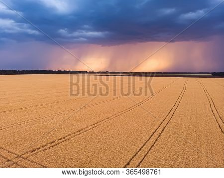 Aerial View On Impressive Thunderstorm Over Wheat Field At Sunset. Dark Storm Clouds Covering The Ru