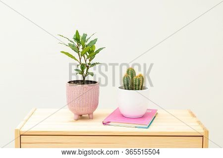 Bay Leaf Plants And Cactus With Books On Wooden Shelf. Plant Home Decoration. Life Style