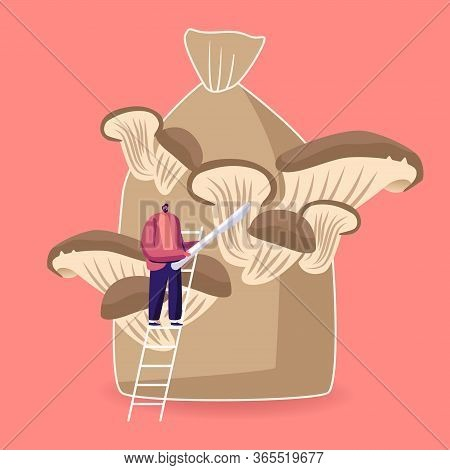 Tiny Male Character Stand On Ladder With Knife In Hands Prepare To Cut Ripe Mushrooms Growing On Hug