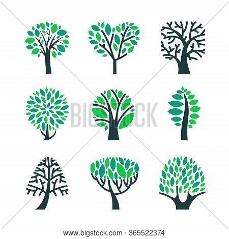 Trees With Green Leaves On Branches Set Isolated On White Background. Summer Or Spring Season Foliar