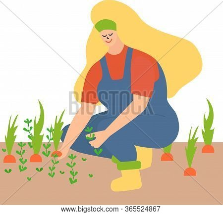 Woman Working In The Garden, Weeding. Pull Out The Weeds And Leaves The Carrots. A Blonde In A Blue
