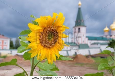 Sunflower On The Background Of Valdai Iversky Svyatoozersky Virgin Monastery For Men. Selvitsky Isla