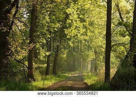 Spring forest path road foggy dawn sunrise sunset sun morning Nature background deciduous Nature background woods trees Nature background Nature background mist fog Nature background misty sunlight light Nature background rays sunbeams Nature background.