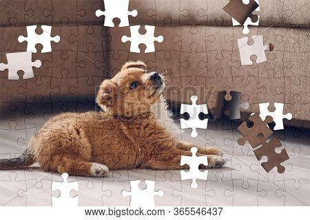 Assorted Jigsaw Puzzle Of Beautiful Cute Puppy Lying On The Bright Floor In The Apartment, Lifting H