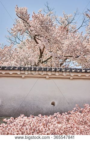Himeji Castle Wall With Cherry Blossoms During The Sakura Season In Himeji, Hyogo Prefecture, Japan