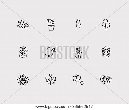 Nature Icons Set. Tulip And Nature Icons With Geranium, Garden And Poplar. Set Of Fruit For Web App