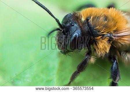 Super Macro Of Earth Bee
