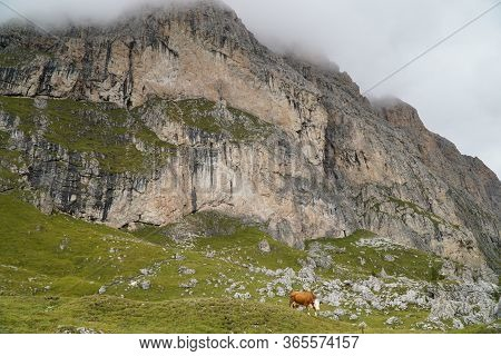 Cow On Alp In The Dolomite Mountains In Front Of A High Mountain / Mastle Alp / Puez Geisler Nature