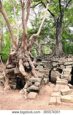 Roots of giant banyan tree on ruins of khmer ancient temple, Angkor Wat (Angkor Thom), Siem reap, Cambodia, Indochina. UNESCO world heritage Site