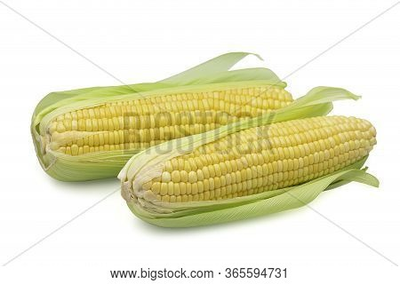 Two Cob Raw Whole Organic Sweet Corn On White Isolated Background With Clipping Path. Sweet Corn Or
