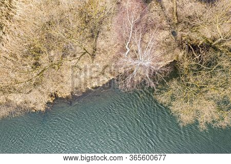 Yellow Dry Grass And Bare Trees On The Shore Of A Pond On An Sunny Spring Day. Aerial Photography