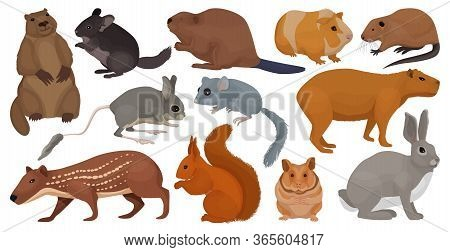 Species Of Rodents Vector Cartoon Set Icon. Isolated Cartoon Set Icon Gnawer.vector Illustration Spe