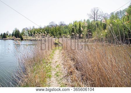 Landscape. Lake And Swamp On The Background Of Beautiful Trees.