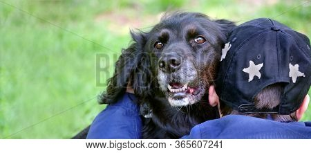 Gordon Setter. Friendship Between A Man And A Dog. Boy And Dog. Dog Loyalty. Copy Space