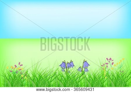Floral Summer Or Spring Landscape, Meadow With Flowers And Blue Sky. Abstract Green Grass. Grass Bor