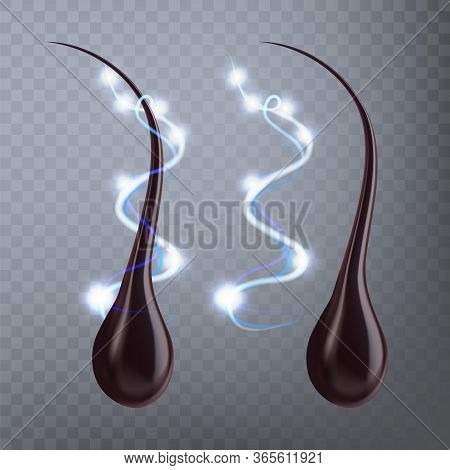 Human Hair Follicle Protective Effect Vector. Hair With Bulb Root Protein Filament That Grows From F