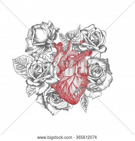 Heart With Bouquet Roses Realistic Hand-drawn Icon Of Human Internal Organ And Flower Frame. Engravi