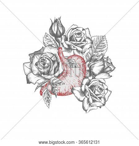 Stomach With Bouquet Roses Realistic Hand-drawn Icon Of Human Internal Organ And Flower Frame. Engra