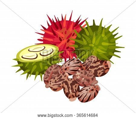 Ricinus Or Castor Oil Plant With Green And Red Fruit Vector Illustration