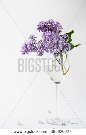 Purple Lilac Blossom Standing In A Stemmed Glass Vase On White Background. Spring Flowers Still Life