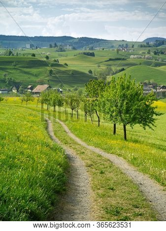 View Of The Rolling Hills And Beautiful Countryside Of Neuheim In The Canton Of Zug, Switzerland.