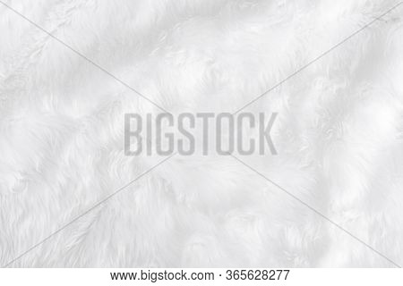 Wide Animal White Wool Sheep Background In Top View Light Natural. Grey Fluffy Seamless Cotton Panor