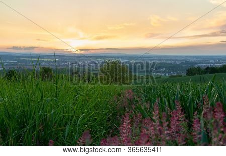 Tree With Colorful Flower And City Ceske Budejovice At Sunset. Czech Landscape