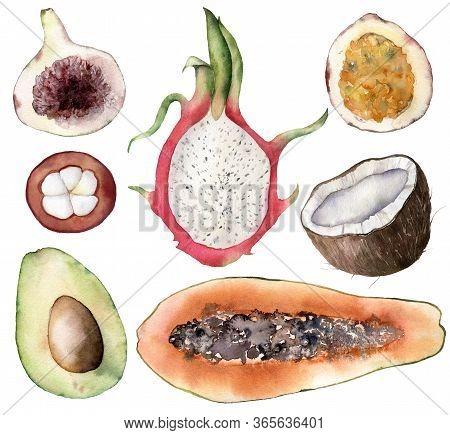 Set Of Watercolor Tropical Fruits. Hand Painted Avocado, Coconut, Dragon Fruit, Fig, Mangostana, Pas