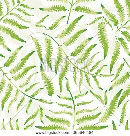 Fern Vector Seamless Pattern Background. Hand Drawn Forest Plant Frond Backdrop. Delicate Green Whit
