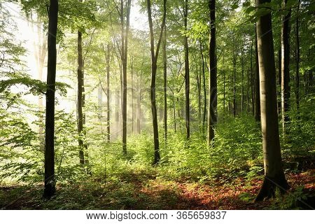 Autumn forest sunrise misty foggy Nature background sunbeams Nature background Nature background Sun rays light Nature background landscape Nature background autumnal Nature background sunlight mist fog Nature background trees fall woods Nature background