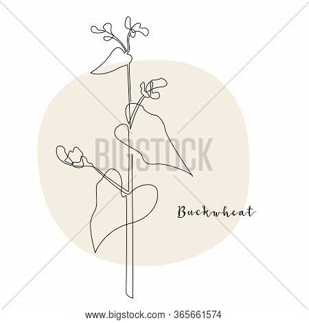 Continuous Line Buckwheat, Grain Crop. Vector Line Art. Perfect For Logo, Packaging Design, Icon, Br