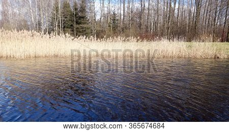 Lake, Dry Reed And Tree Landscape. Natural Background