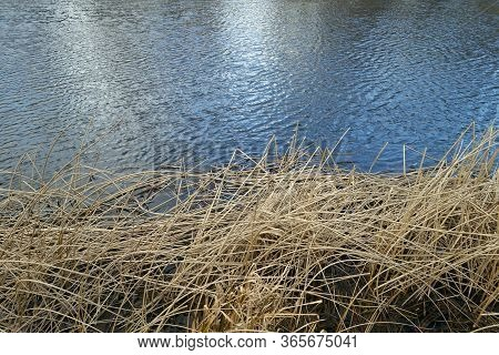 Dry Reed And Lake Water. Natural Background