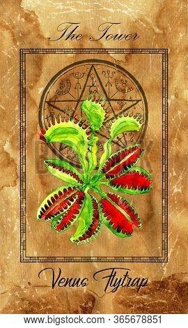 The Tower. Major Arcana Tarot Card With Venus Flytrap And Magic Seal. Full Vintage Deck Enchanted Fl