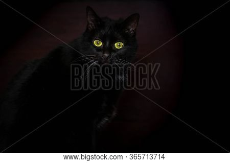 Black Cat In Dark Room. Cat Eyes Glowing In Darkness. Find Black Cat In Black Room Concept. Cat's Gr