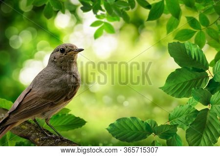 Bird On A Branch And Green Foliage Framing A Beautiful Bokeh Nature Background